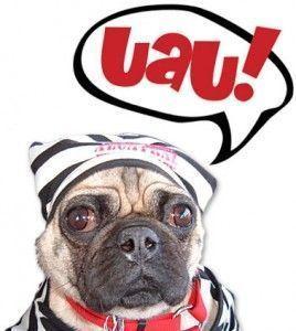 perro carlino uau