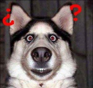 perro alucinado