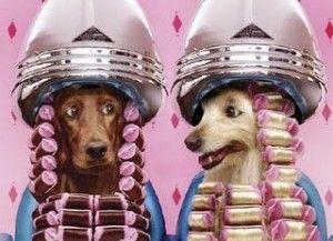 perros pelu