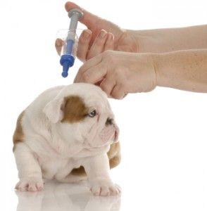 vacuna cachorro
